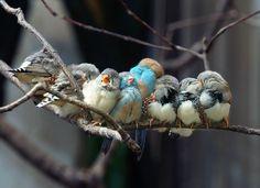 Oh I love birds