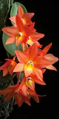 I wish I could grow orchids--you can, they don't require a lot of water, that's how people kill them--overwater.