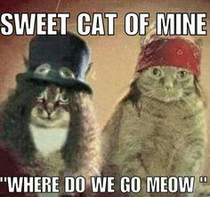 Sweet Cat of Mine...Where do we go Meow ......