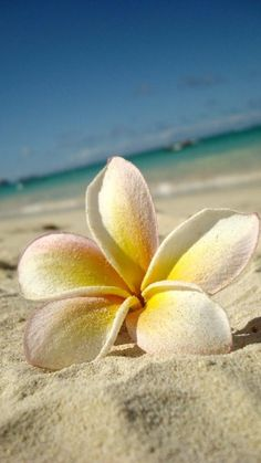 Hawaii V by ~breathe-in-life on deviantART. Plumeria in the sand on the beach.