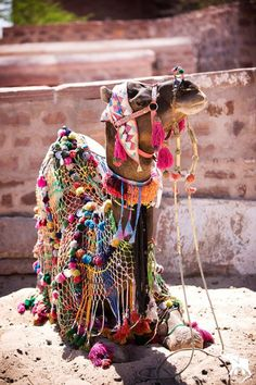 Morocco - adorned camel, wld be so cool if could do this to our alpacas :) Alpacas, We Are The World, In This World, Yarn Bombing, Thinking Day, Tier Fotos, Beautiful Creatures, Color Show, Cute Animals