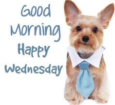 Good Morning Happy Wednesday Have A Blooming Great Day Wednesday Greetings, Blessed Wednesday, Good Morning Wednesday, Good Morning World, Good Morning Greetings, Good Morning Good Night, Good Morning Wishes, Good Morning Quotes, Wacky Wednesday