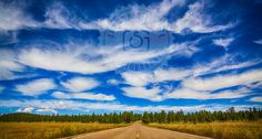 https://flic.kr/p/yb8CRp | Beautiful road, big blue sky, a field of yellow daisies, and huge fluffy white clouds around Mormon Lake, Arizona.   Lila Hum Adventures lilahumadventures.com instagram.com/lila_hum  Photography by Shanna Gillette facebook.com/sasharaephoto