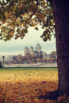Im Rheinpark in Köln