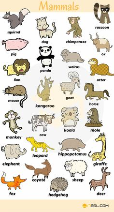 0 0 0 loves animals – keeping them as pets, seeing them at the zoo or visiting a farm… List … ANIMALS! List of animal names with animal pictures in English. Learn these types of animals to increase your vocabulary about animals in English and thus e English Verbs, English Vocabulary Words, Learn English Words, English Writing, English Study, English Grammar, Learning English For Kids, English Lessons For Kids, Kids English