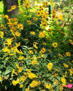 19 roślin, które będą rosły w zacienionych miejscach! - Twoje DIY Forest House, Bonsai, Diy And Crafts, Pergola, Inspiration, Garden, Flowers, Plants, Photography