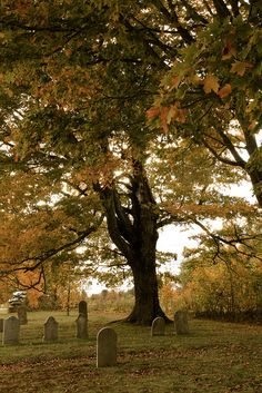 Ancient Guard ~ An old tree keeps guard over an old cemetery in Dover, Maine.  Photo by Daryne Rockett