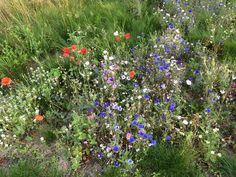 A pretty mix of garden wildflowers :-)