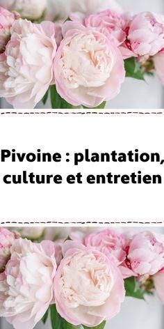 Cut Flower Garden, Permaculture, Plantation, Balcony Garden, Cut Flowers, Outdoor Gardens, Planters, Nature, Inspiration