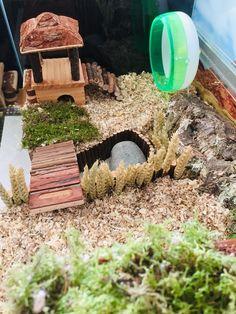 Big Hamster Cages, Gerbil Cages, Hamster Life, Hamster Habitat, Baby Hamster, Hamster House, Hamster Stuff, Hamster Tank, Animal Room