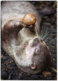 Juggling The Pebble #photographytalk #wildlife