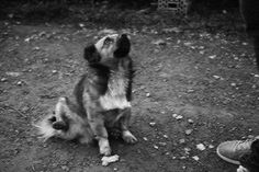 Adorable Animals, Animal Pictures, Corgi, Wordpress, Black And White, Blog, Pictures, Photographers, Seasons Of The Year