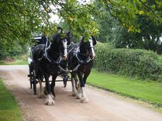 Just as it would have been at Wethele Manor - Shire horses working the land and pulling carriages - absolutely magic to see these beautiful horses bringing the beautiful bride down the driveway to her groom at Wethele Manor