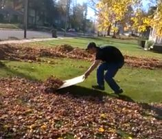 There's a reason the video showcasing this low-tech, but genius way to corral fall leaves went viral. All you need is a giant piece of cardboard and a quick and nimble young person to push all your leaves to the edge of the yard.   - HouseBeautiful.com