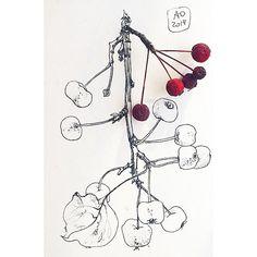 145 отметок «Нравится», 9 комментариев — Juliana Apina (@julianaapina) в Instagram: «Видимо, пока эти яблочки не усохнут окончательно на моем столе, я их буду рисовать Apparently, I…»