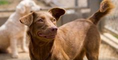 When I was just a few months old, one of the Soi Dog volunteers found me abandoned in his garden. I had obviously been dumped there because I was no longer wanted. At the shelter, they named me Doris.  Will you please visit www.soidog.org to SPONSOR my ongoing care?  https://www.facebook.com/SoiDogPageInEnglish/videos/1085661248142276/