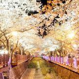 Jinhae,SouthKorea,Cherry blossom Festival.도시정보 :: 진해, 트래블로