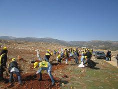 تشجير في فلاوي - البقاع Reforestation #jihad_al_binaa