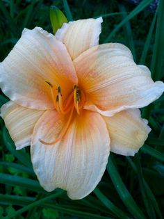 Gorgeous lilly #flower #spring