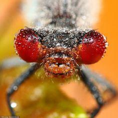 Insectos Cubiertos de Gotas de Rocio .Macrofotografías