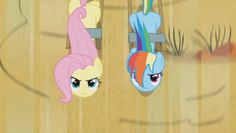 Rainbow Dash and Fluttershy Gif Hooves of Fury Tumblr