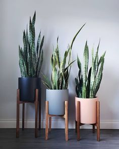 26 Gorgeous Interior Design with Indoor Plants As discussed before, interior decoration is seldom taken on because of the light of center. Indoor plants ought to be an essential part of every interior.