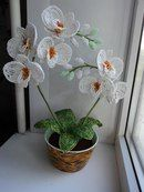 "мк ""Белая орхидея"""