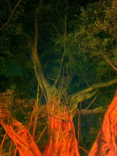 Wonderful trees in Hong Kong