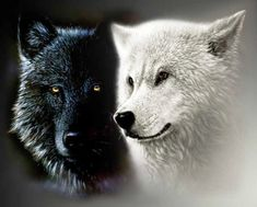 414495__black-and-white-wolf-for-my-dear-friend_p.jpg