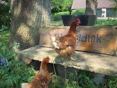 eigen kippen