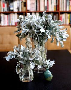 Dusty Miller arrangement, by SarahB from Design Sponge Wedding Flower Arrangements, Flower Bouquet Wedding, Floral Arrangements, Table Arrangements, Dusty Miller, Alternative Bouquet, Succulent Bouquet, Small Succulents, Amazing Flowers