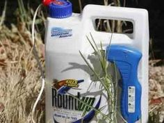 http://www.businessinsider.com/monsantos-roundup-and-resistant-corn-found-to-be-toxic-2012-9