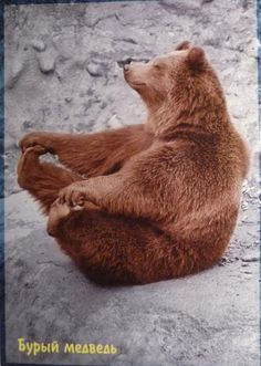 funny yoga bear - or is it the original Yogi Bear? All Gods Creatures, Cute Creatures, Beautiful Creatures, Animals Beautiful, Animals And Pets, Funny Animals, Cute Animals, Happy Animals, Mundo Animal