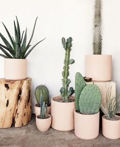 Green & Wild's Guide to Common Houseplants and How To Care For Them – Cactus Cacti And Succulents, Potted Plants, Indoor Plants, Indoor Gardening, Hanging Plants, Plantas Indoor, Cactus Plante, Decoration Plante, Green Decoration
