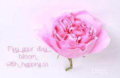 quote roses