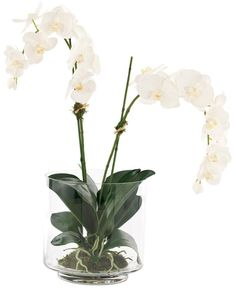 Natural Decorations, Inc. - Orchid Phalaenopsis | Glass Footed Cylinder | Cream White