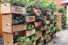 Edible vertical garden