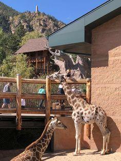 Cheyenne Mountain Zoo, Giraffe, Cute, Park, Animales, Felt Giraffe, Kawaii, Giraffes
