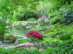 Самые неприхотливые растения для сада - Путь к истинной себе