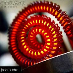 Repost! This is an amazing build!  Shout out @josh.castro  Get some inner vapor ejuice and a coil like this!  www.innervapor.com  Free 10ml juice samples  #glowshot  #innervapor  #innervapormovement #vape #vaporizer #vapelife #vapelyfe #vapeporn #vapenation #vapebuild #coil #coilbuild #coilporn #subohm #subohmclub #ohm #clean #cleanbuilds #buildmaster #coilmaster #vapefam #instavape #vapeoftheday #vapeporn #coilart #artoftheday #instaart #vapeart @vaperzreviews @subohmclub @dripclub