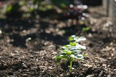 7 Things to Improve Your Soil. I don't think I can call mine soil yet. broken rock/clay maybe Organic Gardening, Gardening Tips, Vegetable Gardening, Soil Improvement, Going Natural, Edible Garden, Go Green, Beautiful Gardens, Garden Landscaping