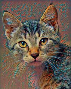 Cat Art Print by Diane Ortlieb www.facebook.com/dgortlieb
