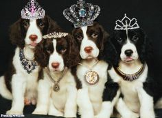 Funny Crown Pictures - Freaking News