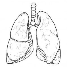 Vetor desenho pulmões humanos. Ilustração de órgão anatômico. Rib Cage Drawing, Medical Drawings, Wallpaper Doodle, Pencil Art Drawings, Drawing Faces, Minimalist Drawing, Sketches Tutorial, Medical Illustration, Anatomy Art