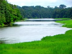 Fleuve NYONG sur la rive du site éco-touristqiue d'EBOGO