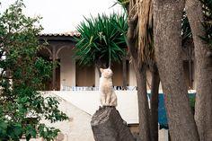Greek, Explore, Cats, Gatos, Cat, Kitty, Greece, Exploring, Kitty Cats