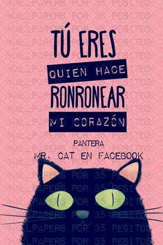 Mr.Cat aww que frase mas linda!!!