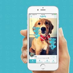 Cutesy: #tinder to find the cutest pet in the world! Product Hunt http://ift.tt/295kmCA #startup #app #technology #pet #pets #dogs #cats