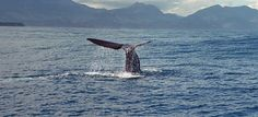 Dominica: The whale watching capital of the Caribbean | Cheapflights.com  #Cheapflights2013