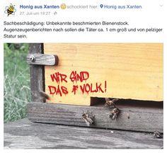 3 kleine Bienen durchbrechen die Schallmauer
